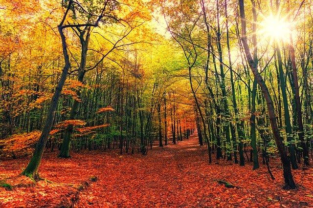 randonnées en automne