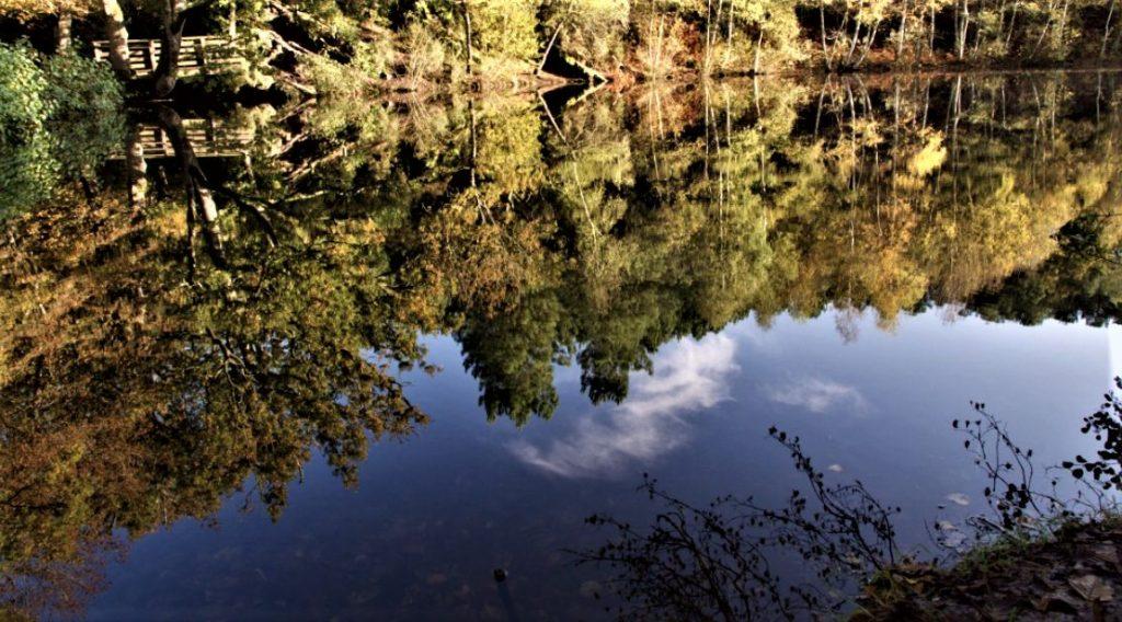 lac dans la forêt de Brocéliande