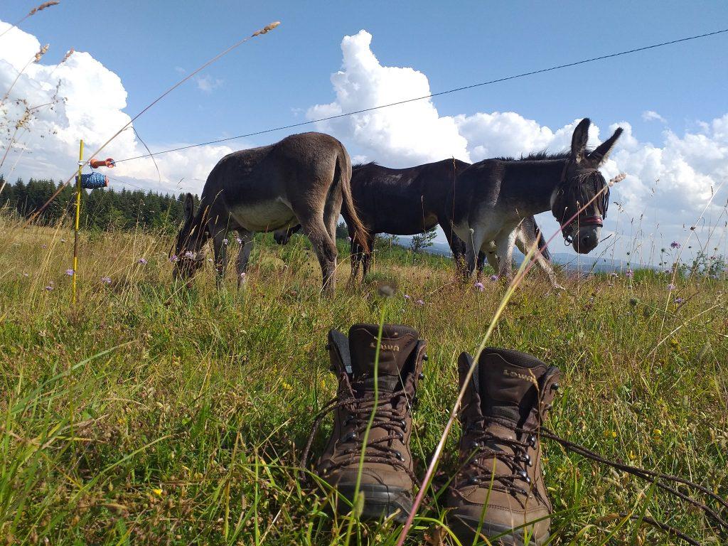 Mathilde et ses deux ânes sur le chemin de Stevenson. Elle raconte dans Avec mes Sabots, l'émission des voyageurs et leurs animaux sur Allô la Planètee