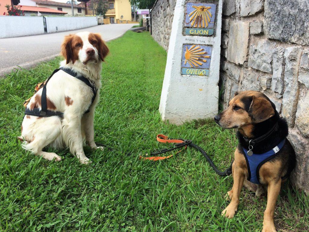 En 2017, un an après un burn out, Oriane décide de faire le chemin de Compostelle avec ses chiens Missac et Ropin